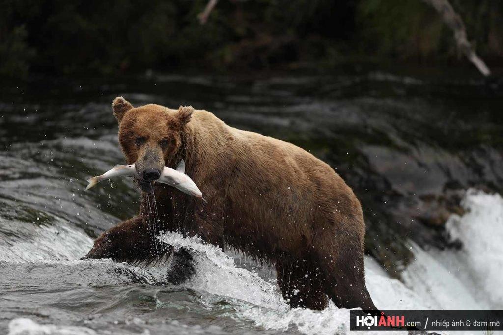 EOSB-hero-bg-bear